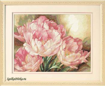 Tulip Trio 35175  / Трио тюльпанов
