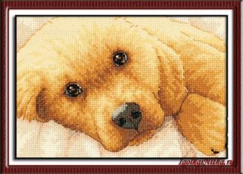 Golden Puppy 65038 / Золотой Щенок