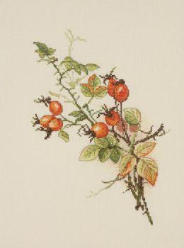 Autumn Briar 04.001.05 / Осенний шиповник