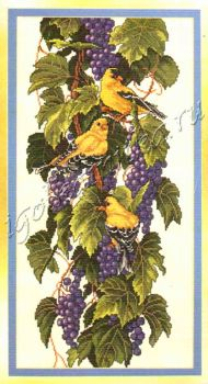Vineyard Goldfinches 03248 / Щеглы на винограднике