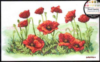 Field of Poppies 03237 / Поле маков