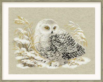 Белая сова 1241