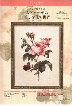 Роза столепестковая 801