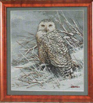 Snowy Owl 45470 / Снежная сова