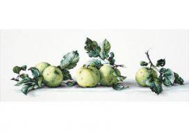 Яблоки B2259