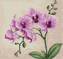 Орхидеи В2227