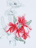 Красный тюльпан В2241