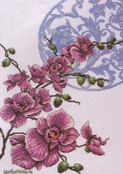 Orchids  2727 / Орхидеи