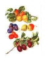 Peaches and Plums  3062 / Персики и сливы