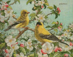 Goldfinches 45576 / Щеглы