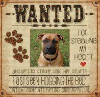 Dog wanted 70-35316 / Розыск Собаки