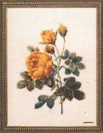 Роза полушаровидная 804